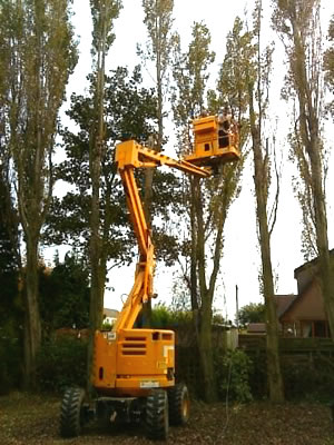 Pruning and removing some trees for a customer in Castleford